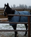 Slim in his winter blanket